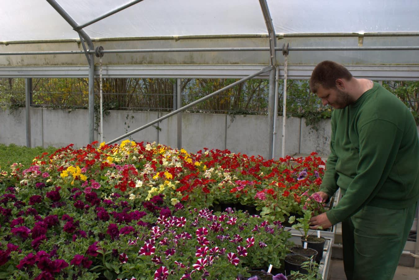 Fachpraktiker/in im Gartenbau Fachrichtung Zierpflanzenbau